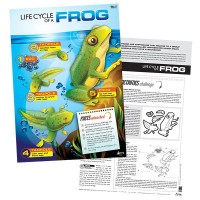 Lifecycle of a Frog poster